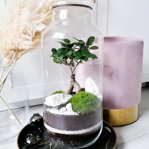 las w słoiku 52 cm. Las w szkle zawiera drzewko bonsai